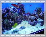 just added video: Early pics of 280gal reef April 2010 DSCN3585.mp4